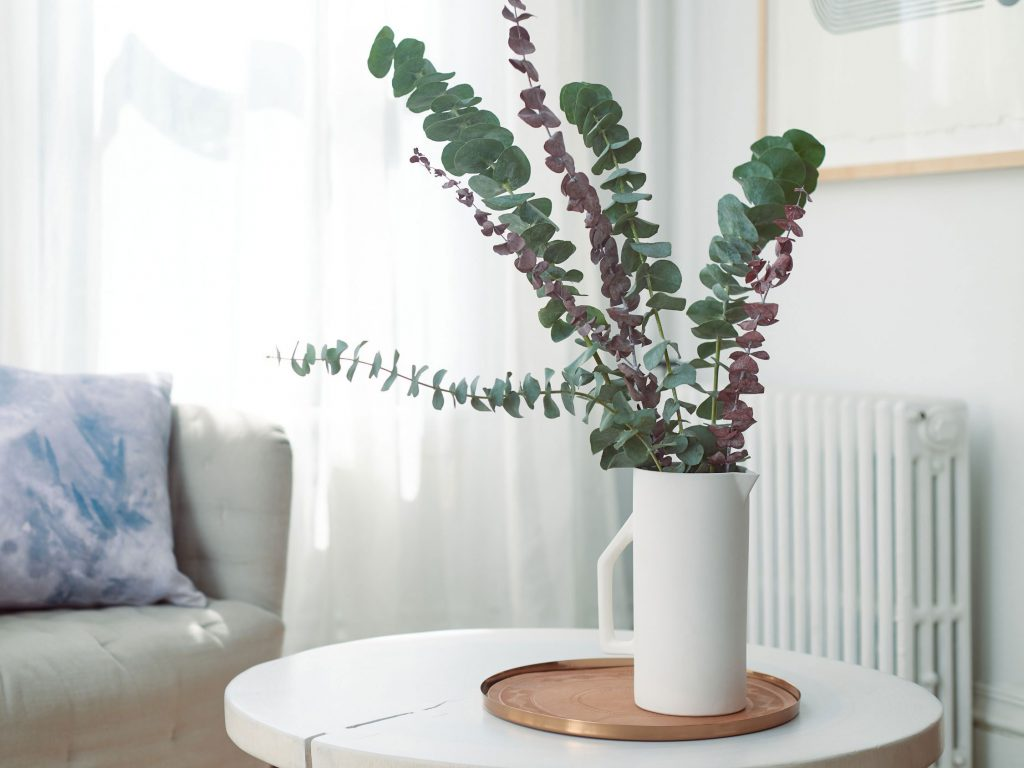 گیاه اکالیپتوس برروی میز