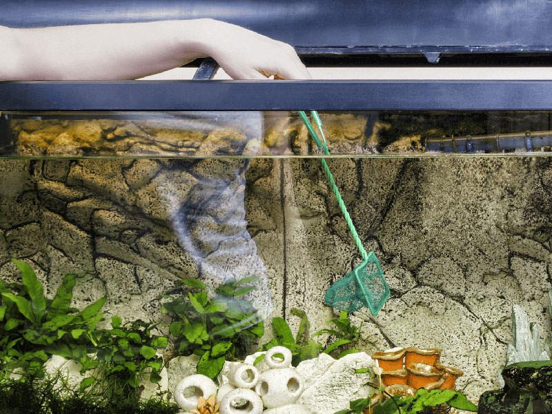 گرفتن ماهی با استفاده از تور مخصوص آکوریوم