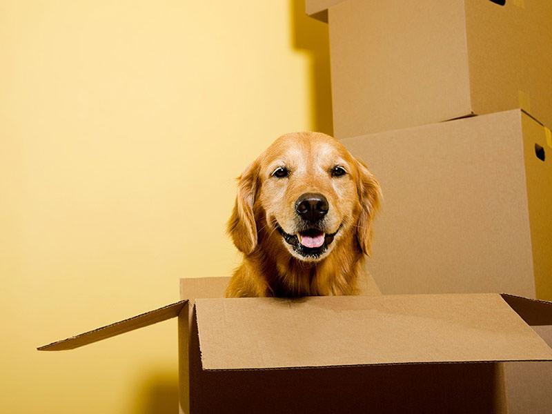 یک سگ خوشحال در داخل کارتن
