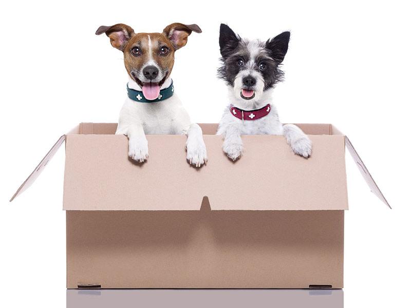 دو سگ خوشحال در کارتن